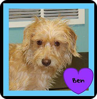 Terrier (Unknown Type, Medium) Mix Dog for adoption in Covington, Louisiana - Ben