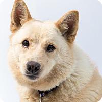Adopt A Pet :: Adira - Santa Barbara, CA