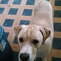 Adopt A Pet :: Hades - Columbus, NE