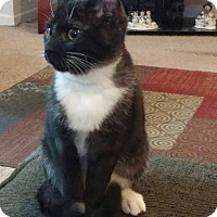 Adopt A Pet :: SPOT - Morris, IL