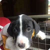 Adopt A Pet :: Frog Man - Hohenwald, TN