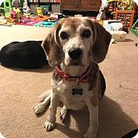 Adopt A Pet :: Missy - cicero, NY