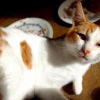 Adopt A Pet :: Louie - Santa Cruz, CA