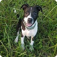 Adopt A Pet :: JayJay - Rexford, NY