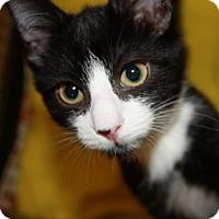 Adopt A Pet :: Kirk - Richmond, VA