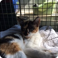Adopt A Pet :: Maryam - Troy, OH