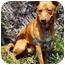 Photo 3 - Finnish Spitz Mix Dog for adoption in Vista, California - Rusty II