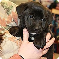 Adopt A Pet :: Fletcher (PENDING!) - Chicago, IL