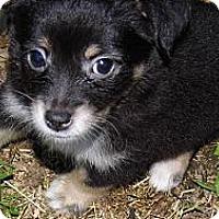Adopt A Pet :: Taylor - Bel Air, MD