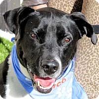 Adopt A Pet :: Mack - Wenatchee, WA
