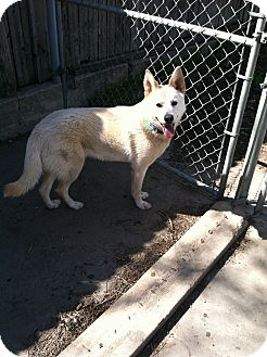 Husky Mix Dog for adoption in Littleton, Colorado - BAILEY