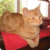 Adopt A Pet :: Cherry - Colmar, PA