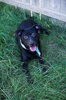 Labrador Retriever Mix Dog for adoption in Jackson, Mississippi - Rhiana
