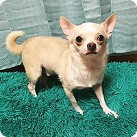 Adopt A Pet :: Ares - Davie, FL