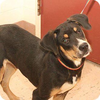 Hound (Unknown Type) Mix Dog for adoption in McDonough, Georgia - RADAR