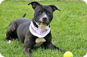 Terrier (Unknown Type, Medium) Mix Dog for adoption in South Haven, Michigan - Dosha