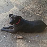 Adopt A Pet :: SweetPea - Acworth, GA