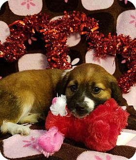 Labrador Retriever Mix Puppy for adoption in Newark, Delaware - Rose