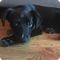 Adopt A Pet :: Sheldon - Austin, TX
