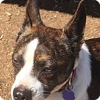 Adopt A Pet :: Rosco - Lexington, KY
