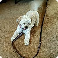 Adopt A Pet :: Sadie - Freeport, NY
