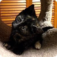 Adopt A Pet :: Skylark - River Edge, NJ