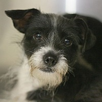 Adopt A Pet :: Dancer - Canoga Park, CA