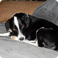 Adopt A Pet :: Sparky COME MEET ME! - Westport, CT