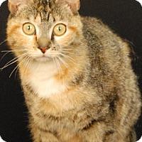 Adopt A Pet :: Monarch - Newland, NC