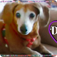 Adopt A Pet :: Dora - Green Cove Springs, FL