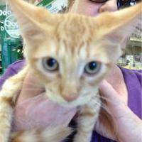 Adopt A Pet :: Furst - Schertz, TX