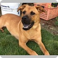 Adopt A Pet :: Luna - Pittsboro, NC