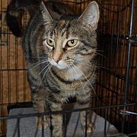 Adopt A Pet :: Mary - Brainardsville, NY