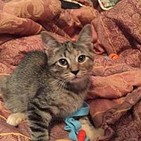Adopt A Pet :: Jezzi - Fairmont, WV