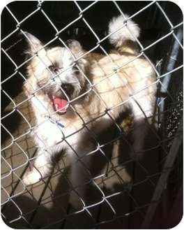 Terrier (Unknown Type, Small) Mix Dog for adoption in Haughton, Louisiana - Sabine kill shelter (Benji)