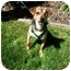 Photo 3 - Beagle/Terrier (Unknown Type, Small) Mix Dog for adoption in Castro Valley, California - Pepper