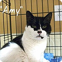 Adopt A Pet :: Amy - Ocean City, NJ