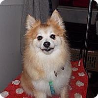 Adopt A Pet :: BALIN - Hesperus, CO