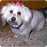 Adopt A Pet :: MADDY - dewey, AZ