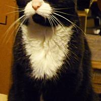 Adopt A Pet :: Maruka - Woodside, NY
