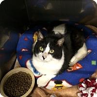 Adopt A Pet :: Indy - Byron Center, MI