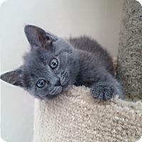 Adopt A Pet :: Serafina - Speonk, NY