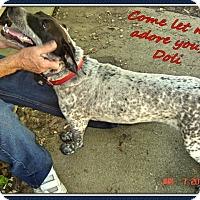 Adopt A Pet :: Doli - Franklinton, NC