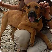 Adopt A Pet :: Lucky - Athens, GA