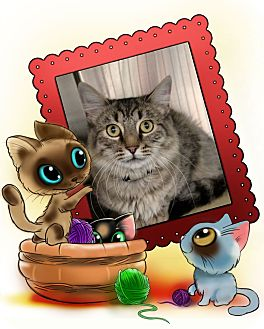 Domestic Longhair Cat for adoption in Pueblo West, Colorado - Cowboy
