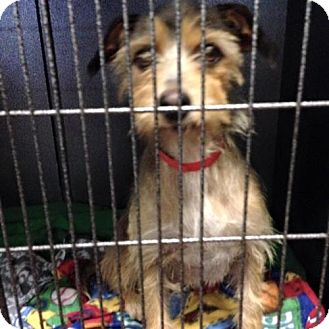 Terrier (Unknown Type, Medium) Mix Dog for adoption in Newburgh, Indiana - Izzy