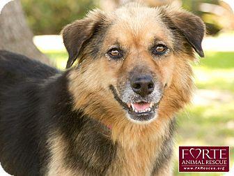 Australian Shepherd/German Shepherd Dog Mix Dog for adoption in Marina del Rey, California - Loni
