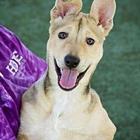Adopt A Pet :: Scarlett - Godfrey, IL