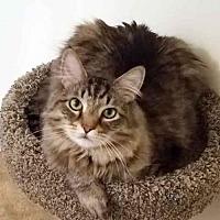 Adopt A Pet :: Cutie - Arlington, VA