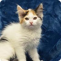 Adopt A Pet :: Edith 170862 - Atlanta, GA